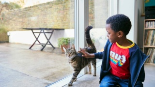 Boy (4-5) stroking a cat